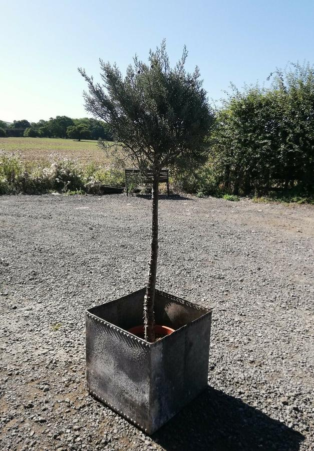 M1311 UPCYCLED RECLAIMED GALVANISED METAL GARDEN PLANTER